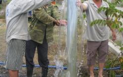Phú Yên: Đổ xô đi xem giếng nước tự phun trào giữa mùa hạn