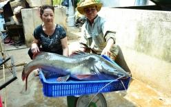 Bắt được cá lăng quý hiểm