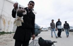 Dinh thự cựu Tổng thống Libya biến thành chợ chim cảnh