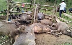 Sét đánh chết 9 con trâu ở Bắc Kạn