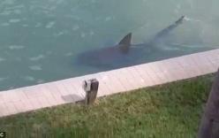Choáng với video cá mập bơi lội ngay cạnh nhà