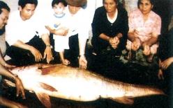 Sửng sốt cá sủ vàng đại gia Hải Phòng trả 2,5 tỉ đồng không mua được