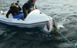 """Video: Cá mập trắng khổng lồ suýt """"xơi tái"""" 2 người đàn ông"""