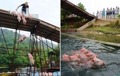 """Trung Quốc dùng """"lợn bay"""" mua vui cho khách du lịch"""