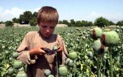 Video: Những đứa trẻ lớn lên cùng ma tuý