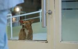 Xúc động chú chó ngồi chờ chủ ngoài bệnh viện