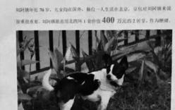 Tặng nhà 14 tỉ cho người tìm thấy chó cưng bị lạc