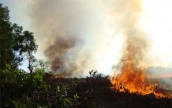 Bắt thủ phạm làm cháy rừng