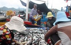 Ngư dân trúng đậm mẻ cá lớn thu gần 4 tỷ đồng