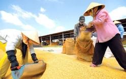 Thủ tướng yêu cầu xem xét bãi bỏ thuế GTGT trên hạt lúa