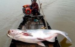 Thủy quái trăm triệu sa lưới ngư dân Việt