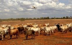 Cận cảnh khu đất đắt nhất hành tinh giá 7 nghìn tỉ