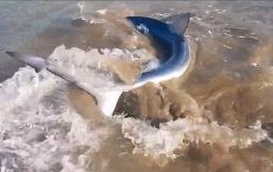 Người đàn ông liều mạng cầm đuôi cá mập xanh