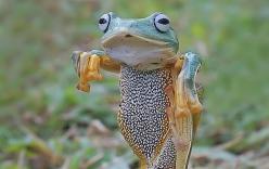 Thích thú với bức ảnh chụp con ếch bay tung cước như võ sư