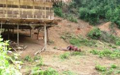 Bí ẩn vụ thảm sát 4 người trong 1 gia đình rúng động xứ Nghệ