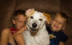 Những điều cha mẹ cần chú ý khi cho trẻ chơi đùa với chó