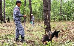 Video: Chó nghiệp vụ rà phá bom mìn ở Quảng Trị