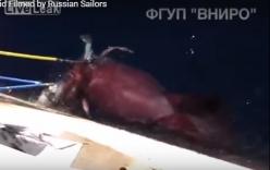 Video: Mực khổng lồ tranh giành cá với các thủy thủ Nga