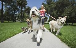 Dắt chó đi dạo, thu nhập hơn 10 triệu đồng/tháng