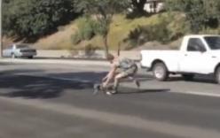 Chàng trai liều mình băng qua làn xe lao vun vút để cứu mèo