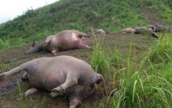 Hà Giang: 19 con trâu bị sét đánh chết la liệt trên bãi cỏ