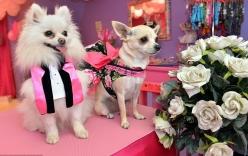 Đám cưới xa hoa gần 200 triệu đồng của cặp đôi... cún cưng