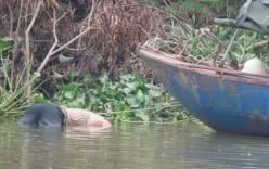 Đang đánh cá, phát hiện thi thể nam giới nổi trên sông