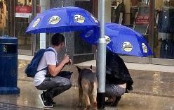 Cặp đôi ướt sũng vì thương xót chú chó lạ bị buộc giữa trời mưa