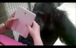 Video: Hài hước với hình ảnh chú tinh tinh