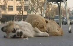 Những clip cảm động về tình bạn của động vật