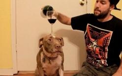 Kinh ngạc với hình ảnh chú chó dùng đầu giữ thăng bằng ly rượu