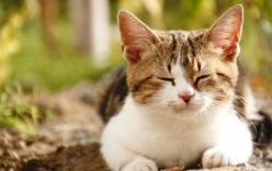 Động vật liệu có nằm mơ khi ngủ?