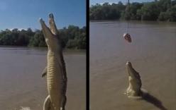 Khoảnh khắc ngoạn mục của cá sấu nhảy lên không trung đớp mồi