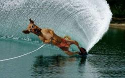 Những khả năng đáng kinh ngạc của động vật (Phần 1)