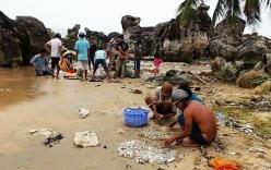 Hải sâm dạt đầy trên bãi biển Phú Quốc