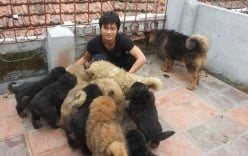 Đam mê chó mèo, 9x kiếm trăm triệu mỗi tháng