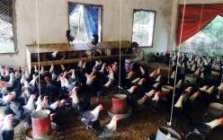 Ông chủ trẻ nuôi gà đẻ trứng, thu 30 triệu/ ngày