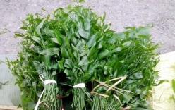 Bà nội trợ Hà Nội xếp hàng đặt mua rau ngót rừng 150.000 đồng/kg