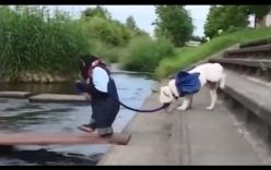 Video: Phì cười với cảnh chú chó được khỉ dắt qua sông