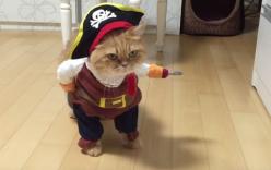 Chú mèo gây sốt khi được hóa trang thành cướp biển Caribbe