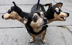 Lễ hội Halloween dành cho chó độc đáo tại Ukraine