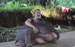 Video: Thú vị với hình ảnh chú voi con nũng nịu đòi ôm cô gái