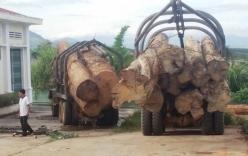 Bắt vụ vận chuyển gỗ lậu lớn nhất từ trước tới nay
