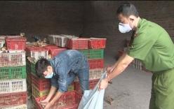 Quảng Ninh: Phát hiện 7 nghìn con gia cầm nhập lậu từ Trung Quốc