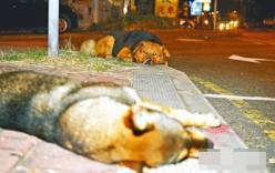 Xúc động với hình ảnh chú chó nằm cạnh bạn đã chết suốt đêm