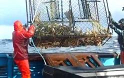 Mục sở thị màn đánh bắt cua ghẹ trên biển