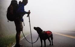 Chú chó dẫn chủ nhân bị mù đi phượt khắp thế giới