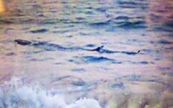 Xuất hiện cá lạ nặng khoảng 1 tấn, cấm người dân tắm ở biển Tuy Hòa