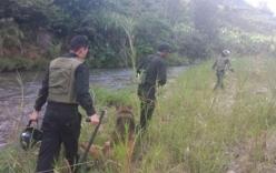 Đã bắt được hai tên cướp taxi, trốn trong rừng sâu