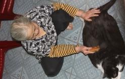 Mèo nặng 20kg ở Nam Định, trả 120 triệu đồng không bán